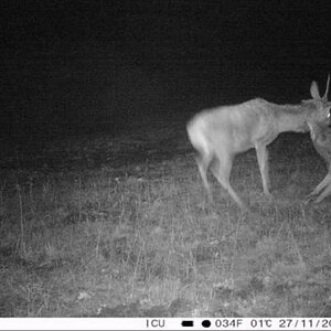 Trail Cam Pictures of Deer & Wolf in Germany