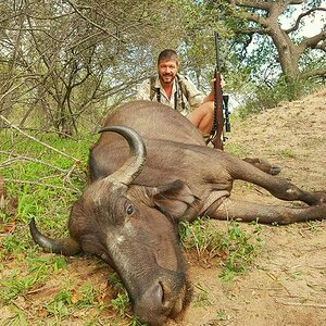 South Africa Hunt Cape Buffalo