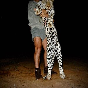 South Africa Hunting Leopard