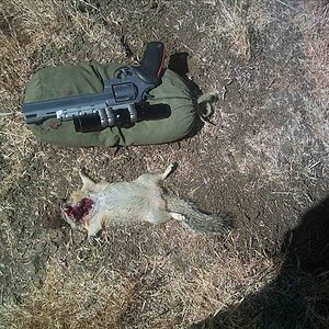 Ground Squirrel Hunting USA