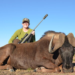 Black Wildebeest Hunting South Africa