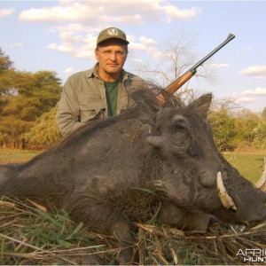 Nice Warthog from Mozambique