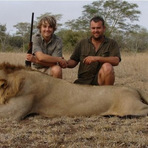 Free roaming Lion hunted in Mozambique