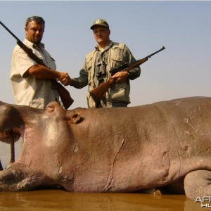 Hippo Bull hunted in Mozambique