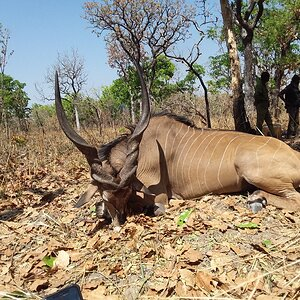 Lord Derby Eland Hunting Africa