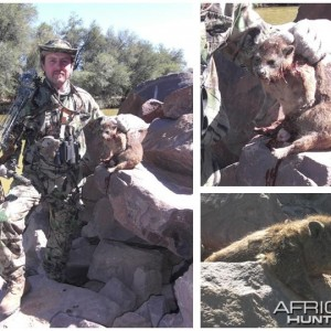 Bowhunting Rock Dassie