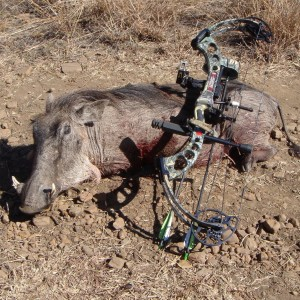 Hunting trip South Africa - my first Warthog