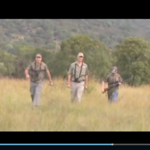 Hunting Zebra at Spiral Horn Safaris in SA