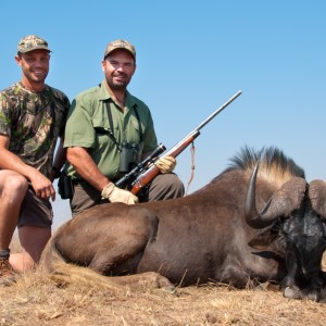 Hunting Black Wildebeest 2010 RSA