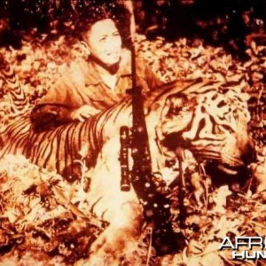 Huge Javan Tiger shot in 1957