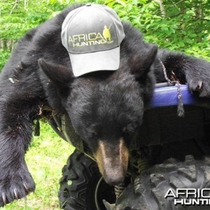 Bear hunting in St. George New Brunswick Canada