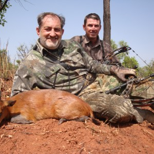 Red Flanked Duiker bowhunted in CAR with Central African Wildlife Adventure