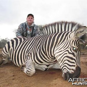 Zebra Hunt in Save Valley Conservancy Zimbabwe