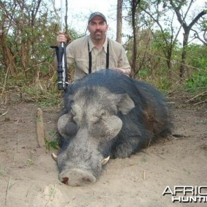 Giant Forest Hog hunted with CAWA in CAR