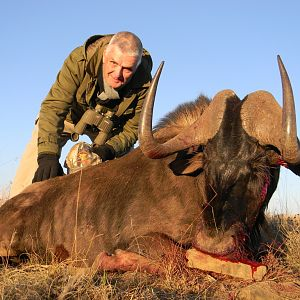 Black Wildebeest South Africa