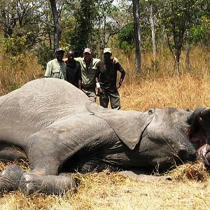 1,80 meter - 25 kg Elephant hunted in tanzania