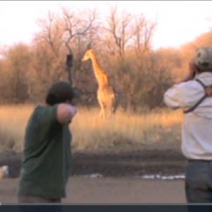 Bow Hunting Giraffe