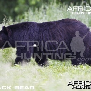 Hunting Vitals Black Bear