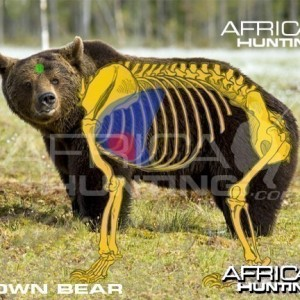 Hunting Vitals Brown Bear