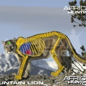 Hunting Vitals Mountain Lion
