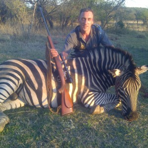 Zebra from Colenso