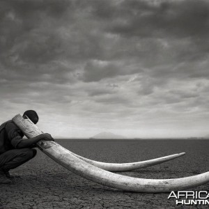 Ranger with Tusks of Killed Elephant, Amboseli, 2011 by Nick Brandt