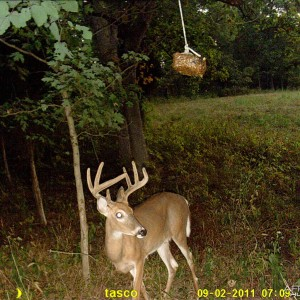 First look at a Buck