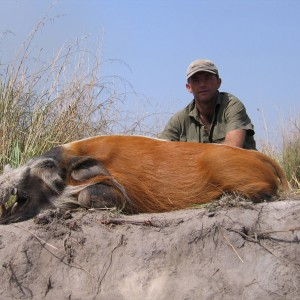Red river hog hunting in CAR