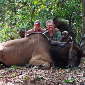 Old eland that took his last steps in to the rainforest