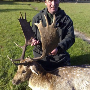 Hunting Fallow Bucks in the UK