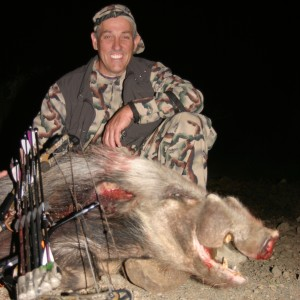 East Cape Bushpig