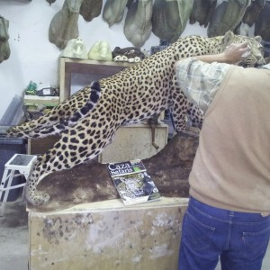 The artist... my friend Juan Carlos mounting the Leopard