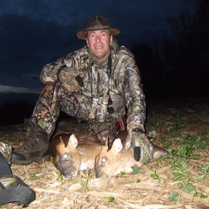 Hunting Muntjac at Leicestershire Castle in England