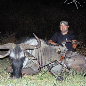 Blue Wildebeest bowhunted at Ozondjahe Hunting Safaris Namibia