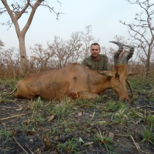 Lelwel Hartebeest hunted in Central Africa with Club Faune