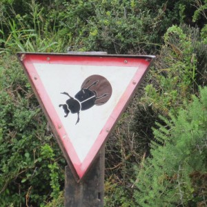 Mind the dung beetles.