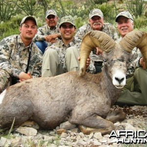 Desert Bighorn Sheep Hunt in Texas