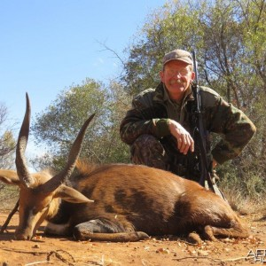 A good Bushbuck from Bos en Dal