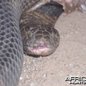 Global Rescue evacuates man bitten by African Cobra
