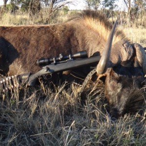 South Africa Black Wildebeest