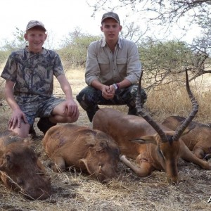 "23 1/4 "" Impala and 3 warthogs shot by a client at Harmonie Safari's."