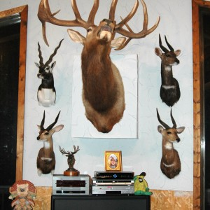 Trophy Room West Wall Center