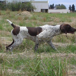Awesome GSP's in South Africa