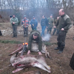 Driven hunt in Hungary.