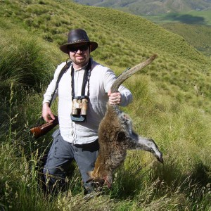 Wallaby hunting in New Zealand