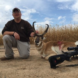 Texas panhandle pronghorn