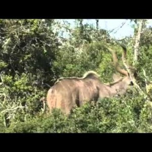 Animals of the Eastern Cape