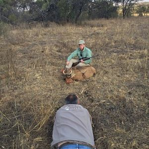 South Africa Warthog Hunt