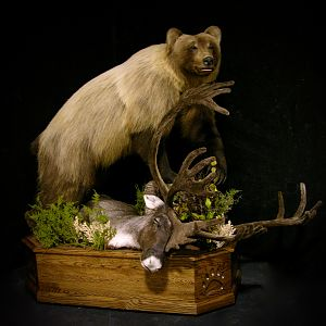 Mountain Grizzly Bear Full Mount Taxidermy