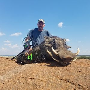 South Africa Warthog Bow Hunt